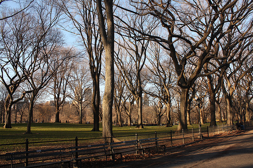 "Perfect lighting in ""The Mall"" section of Central Park"